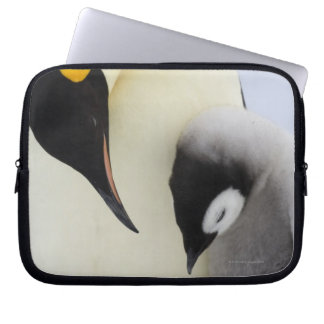 Emperor Penguin looking at chick Laptop Sleeve