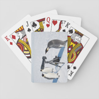 Emperor Penguin Photographer Playing Cards