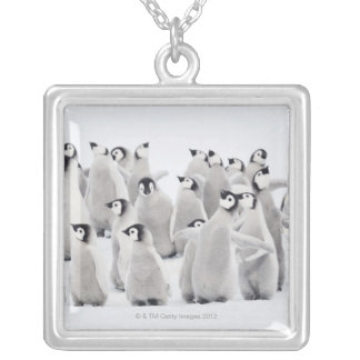 Emperor penguin silver plated necklace