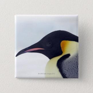 Emperor Penguin, Snow hill island, Weddel Sea 15 Cm Square Badge