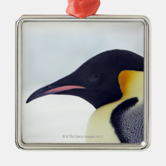 Emperor Penguin, Snow hill island, Weddel Sea Christmas Ornament