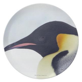 Emperor Penguin, Snow hill island, Weddel Sea Plate