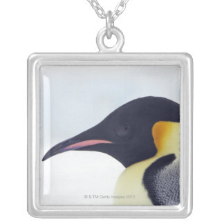 Emperor Penguin, Snow hill island, Weddel Sea Silver Plated Necklace