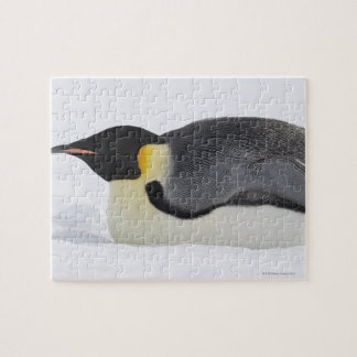 Emperor Penguin, Snow Hill Island, Weddell Sea, Jigsaw Puzzle