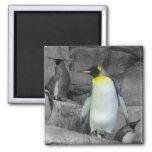 Emperor Penguin Square Magnet