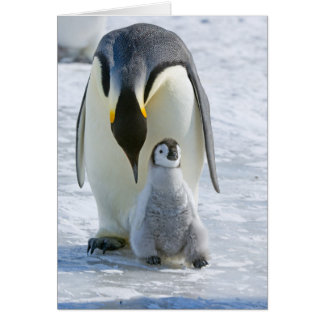 Emperor Penguin with Chick - note card