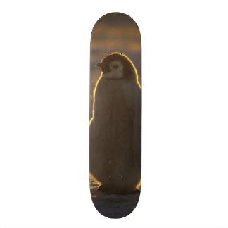 Emperor Penguins, Aptenodytes forsteri), 2 Custom Skate Board