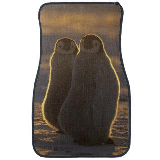 Emperor Penguins, Aptenodytes forsteri), 2 Floor Mat