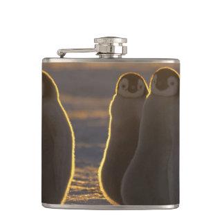 Emperor Penguins, Aptenodytes forsteri), 2 Hip Flask