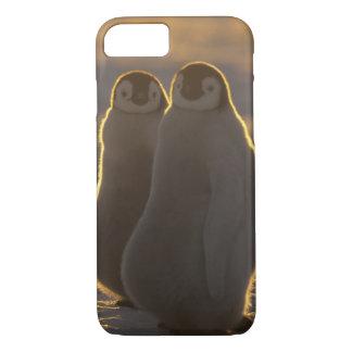 Emperor Penguins, Aptenodytes forsteri), 2 iPhone 8/7 Case