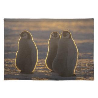 Emperor Penguins, Aptenodytes forsteri), 2 Placemat