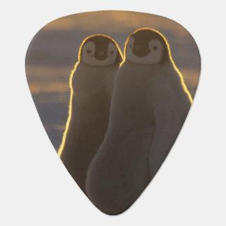 Emperor Penguins, Aptenodytes forsteri), 2 Plectrum