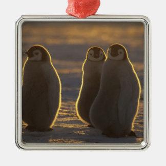 Emperor Penguins, Aptenodytes forsteri), 2 Silver-Colored Square Decoration