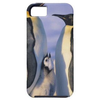 Emperor Penguins (Aptenodytes forsteri) Adults iPhone 5 Cover