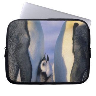 Emperor Penguins (Aptenodytes forsteri) Adults Laptop Sleeve