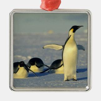 Emperor Penguins, Aptenodytes forsteri), Christmas Ornament