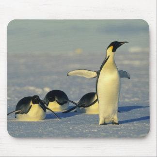 Emperor Penguins, Aptenodytes forsteri), Mouse Mat