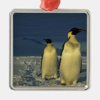 Emperor Penguins, Aptenodytes forsteri), Mt. Christmas Ornament
