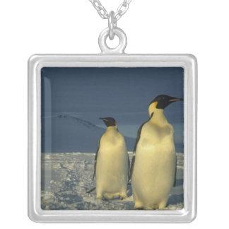 Emperor Penguins, Aptenodytes forsteri), Mt. Silver Plated Necklace