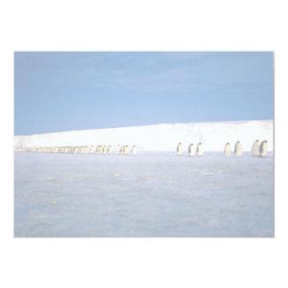 "Emperor penguins by moonlight, Antarctica 5"" X 7"" Invitation Card"