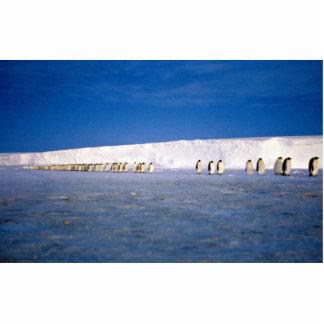 Emperor penguins by moonlight, Antarctica Photo Sculptures