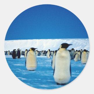 Emperor penguins by moonlight, Antarctica Round Sticker