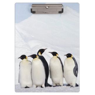 Emperor Penguins Clipboard