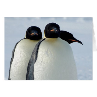 Emperor Penguins Huddled Greeting Card