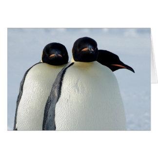 Emperor Penguins Huddled Greeting Card