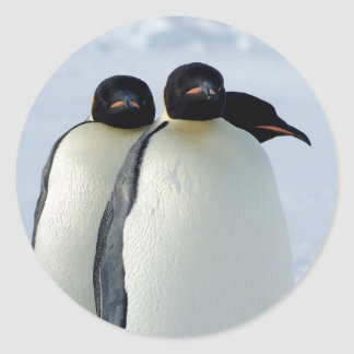 Emperor Penguins Huddled Round Sticker