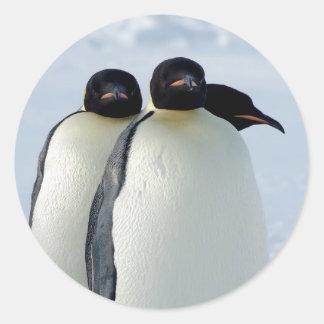 Emperor Penguins Huddled Round Sticker