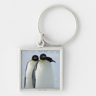 Emperor Penguins Huddled Silver-Colored Square Key Ring