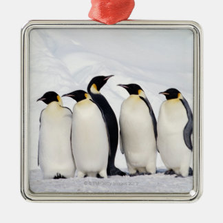 Emperor Penguins Silver-Colored Square Decoration