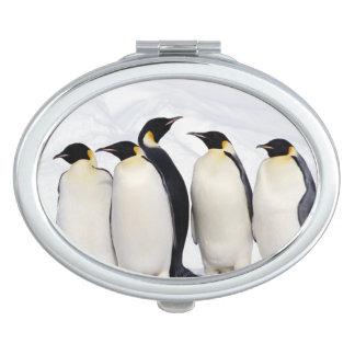 Emperor Penguins Vanity Mirror