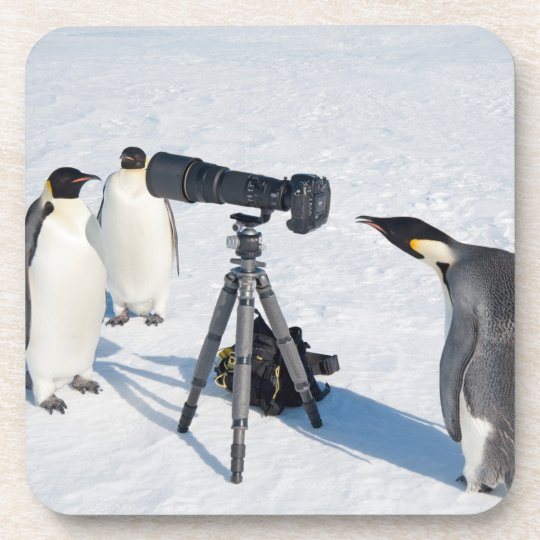 Emperor Penguins with Camera - beverage coaster