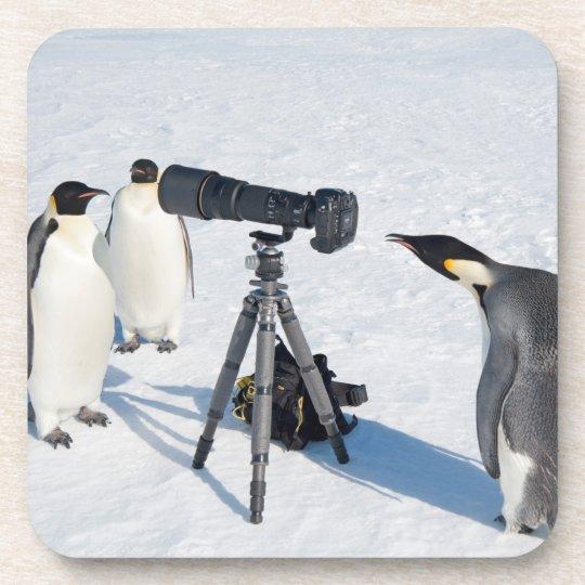 Emperor Penguins with Camera - beverage coaster