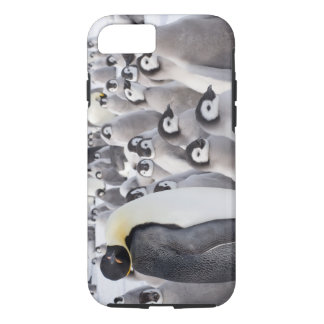 Emperor Penguins with Chicks iPhone 7 case