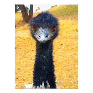 Emu Photo Print