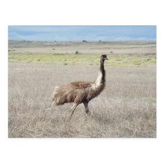 emu stride postcard