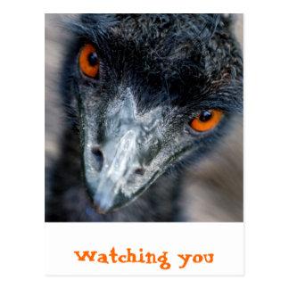 Emu watching postcard
