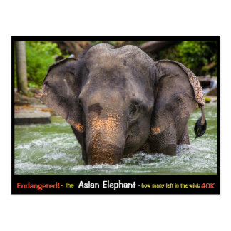 Endangered: All about the Asian Elephant - Postcard