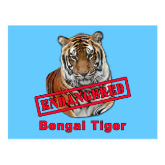 Endangered Bengal Tiger  Products Post Card