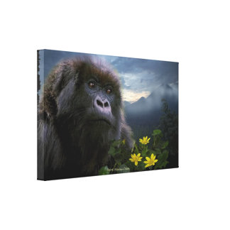 "Endangered Mountain Gorilla named ""HOPE"" Art Stretched Canvas Print"