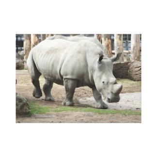 Endangered Northern White Rhinos Canvas Prints
