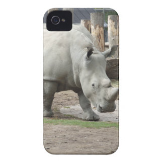 Endangered Northern White Rhinos iPhone 4 Case-Mate Cases