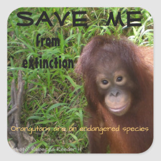 Endangered Species Orangutan Wildlife Square Sticker