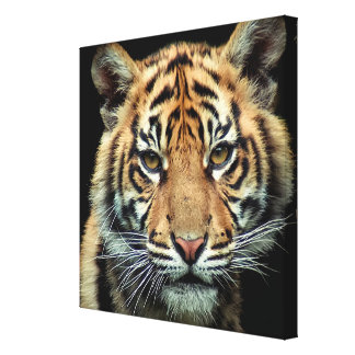 Endangered Tiger Cub Canvas Print