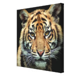 Endangered Tiger Cub Canvas Prints