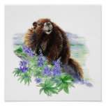 Endangered Vancouver Island Marmot