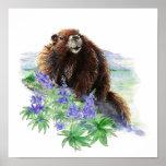 Endangered Vancouver Island Marmot Poster